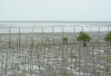 ประธานยุทธศาสตร์ป่าชายเลน ต.บางหญ้าแพรก จ.สมุทรสาคร เผยแผนฟื้นฟูป่าชายเลนเพิ่มอีก 100 ไร่ ใน 5 ปี