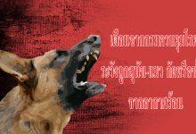 เตือนจากกรมควบคุมโรค ระวังถูกสุนัข-แมว กัดหรือข่วน เนื่องจากอากาศร้อนอาจทำสัตว์หงุดหงิดง่าย เสี่ยงติดเชื้อโรคพิษสุนัขบ้า