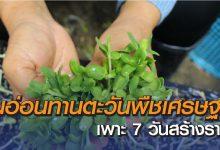 ต้นอ่อนทานตะวัน พืชเศรษฐกิจ มหัศจรรย์เพาะ 7 วัน สร้างรายได้ กำไรดี