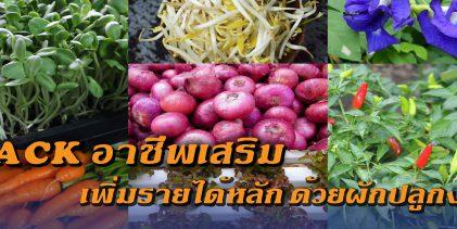 HACK อาชีพเสริม เพิ่มรายได้หลัก ด้วยผักปลูกง่าย