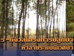 นักวิชาการกังวลโครงการปลูกป่า ขาดความเข้าใจ ทำลายระบบนิเวศป่าชายหาด